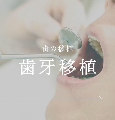 歯の移植 歯牙移植|神戸三宮谷歯科クリニック